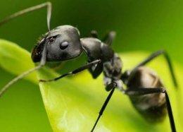 Ônibus movido a veneno de insetos pode começar a rodar ainda neste ano.