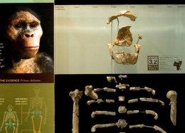 Fóssil Lucy ganha homenagem em Doodle de seus 41 anos de descoberta