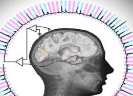 Cientistas decodificam respostas cerebrais e até já adivinham pensamentos