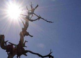 FAO lança novo sistema para detectar a seca desde o espaço.