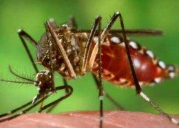 Com surto, aprovação de vacina da dengue pode ser antecipada.