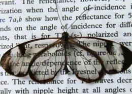 Telas à prova de reflexo estão mais próximas graças a asa de borboleta.