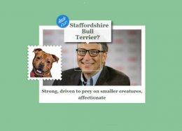 Aplicativo da Microsoft diz com qual raça de cachorro você se parece