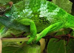 Cientistas criam material que troca de cor igual ao camaleão.