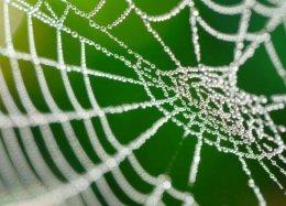 Cientistas recriam teia de aranha em laboratório.