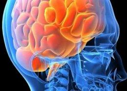 Cientistas planejam criar mini cérebro que custa R$ 1.